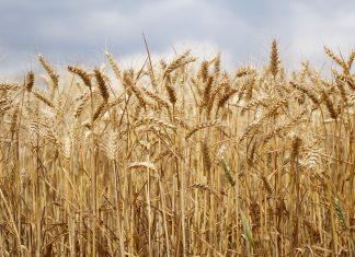 Agrarwirtschaft / Pixabay
