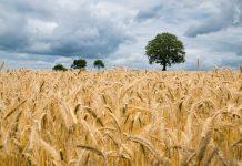 MABEWO AG: Bauernhof auf kleinstem Raum / Pixabay