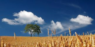MABEWO AG: Farm to Fork-Produktionsverfahren